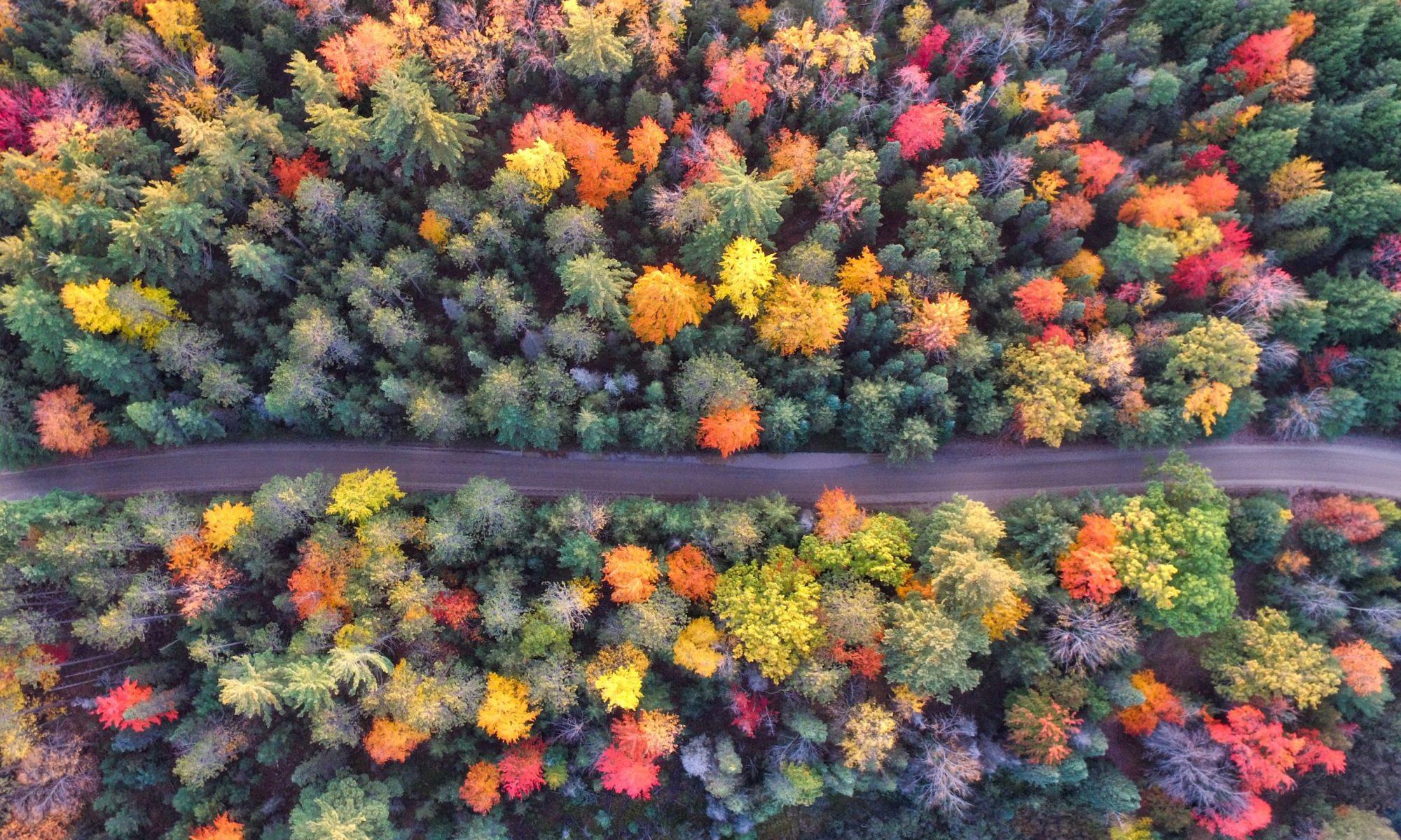 Trees Now